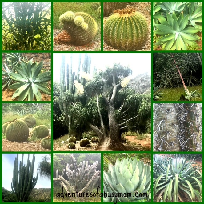 cactus collage.jpg