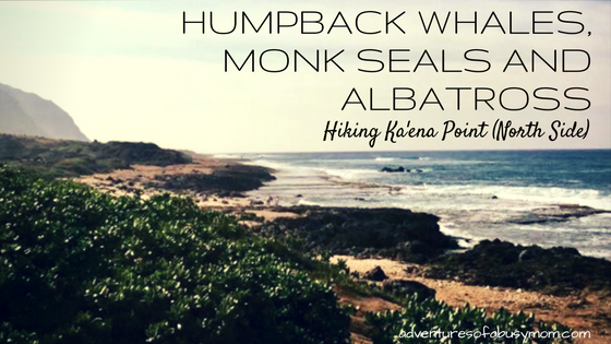 Humpback whales, monk seals and albatross hiking ka'ena point (north side)